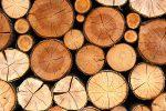 Medienos apdirbimo gamybinė bazė su pilna įranga - 1