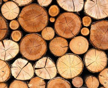Medienos apdirbimo gamybinė bazė su pilna įranga